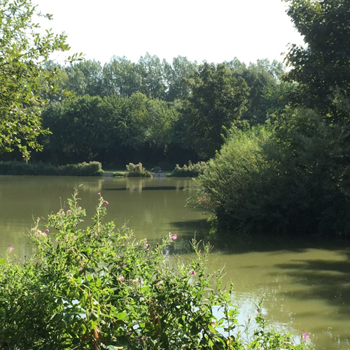 Cottington Lakes, deal, kent, camping, caravan, pitches, tent with electric, fishing