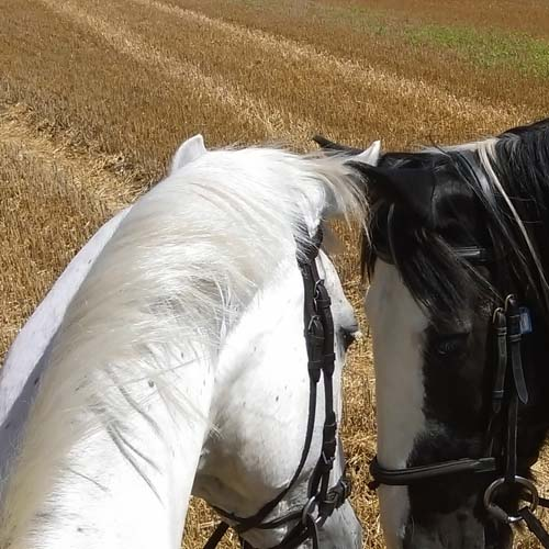 Cornilo Riding, Family Fun, Horses, Dover, Kent